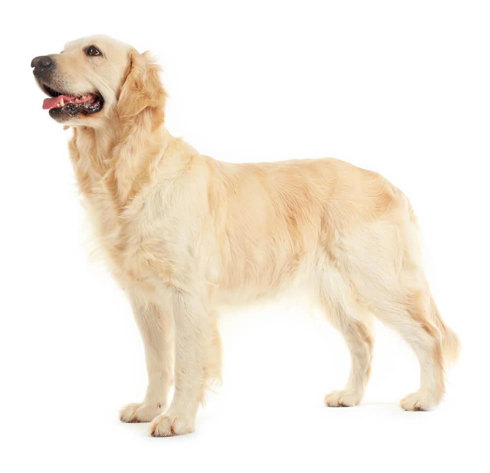 Dog Side