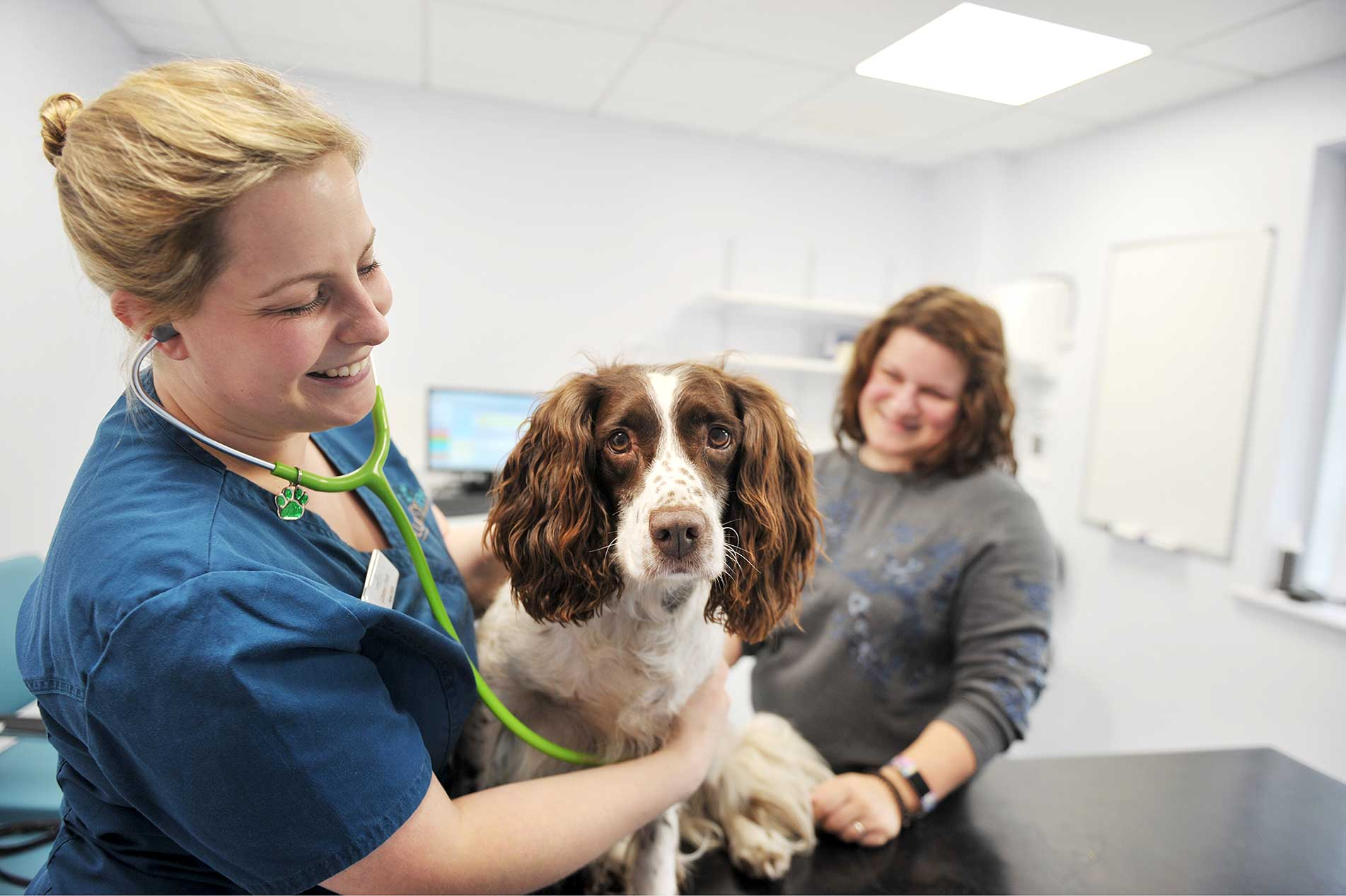 Lindsey Dodd, Head Nurse at Lumbry Park checking dog